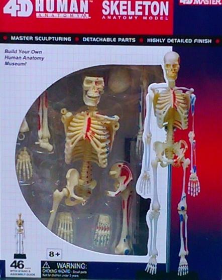 4D 人體全身骨骼解剖